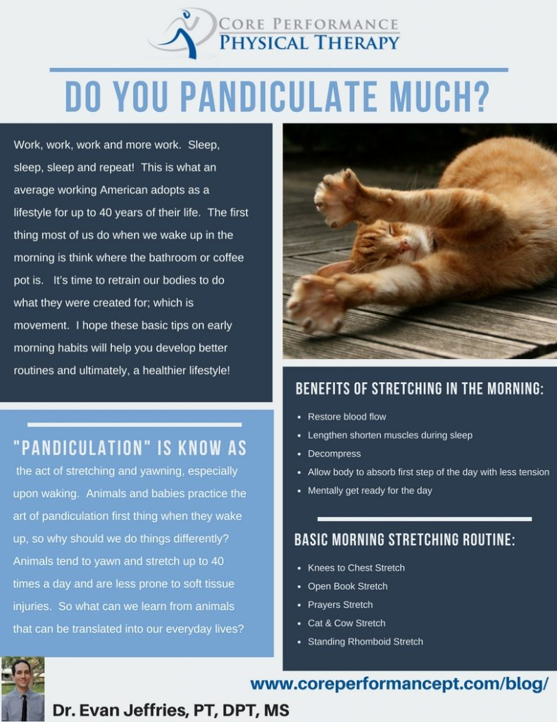 DO YOU PANDICULATE MUCH?